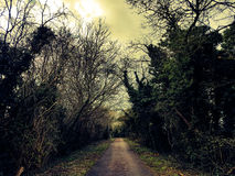English wood pathway. Forest wooded pathway with trees and shrubs bushes either side of path Stock Image