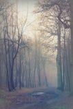 English woodland on a foggy misty morning Royalty Free Stock Photography