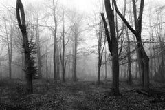 English woodland on a foggy misty morning Royalty Free Stock Images