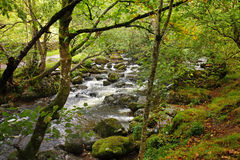 English Woodland River. A Bubbling Stream running through shaded woodland in England Stock Photography