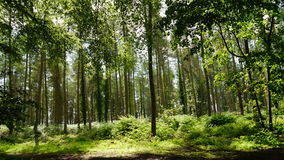 English Woodland. An English Woodland in Summertime Stock Photo