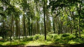 English Woodland Stock Photo