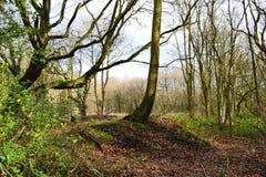 English woods. Stock Photos