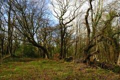 English woods. Stock Image