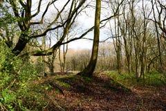 English woods. Royalty Free Stock Image