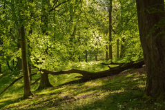 English Woods Stock Photo