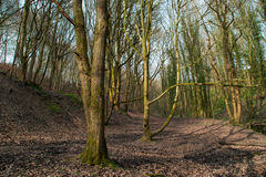 English woods. Royalty Free Stock Image