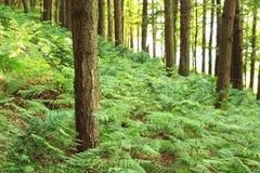 English woods Stock Images