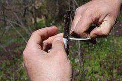 Engraft дерева Стоковое фото RF