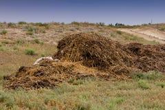 Engrais d'humus avec l'herbe photographie stock