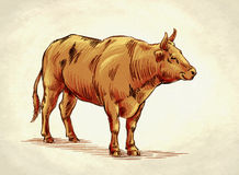 Engrave ink draw cow illustration Stock Photos