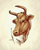 Engrave ink draw cow illustration Stock Image
