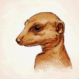 Engrave ink draw meerkat illustration Stock Photo