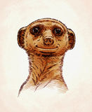 Engrave ink draw meerkat illustration Stock Photography