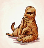 Engrave ink draw meerkat illustration Royalty Free Stock Image