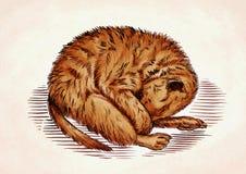 Engrave ink draw meerkat illustration Stock Image