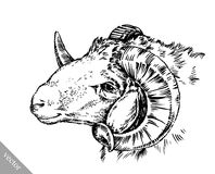 Engrave ink draw sheep illustration Royalty Free Stock Images