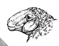 Engrave ink draw sheep illustration Stock Photo
