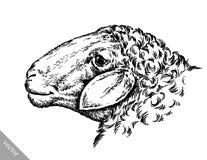 Engrave ink draw sheep illustration Stock Photo