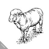 Engrave ink draw sheep illustration Stock Photography