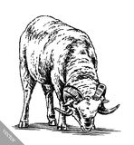 Engrave ink draw sheep illustration Royalty Free Stock Photos