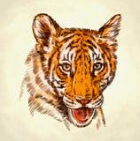 Engrave ink draw tiger illustration Stock Image