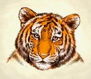 Engrave ink draw tiger illustration Royalty Free Stock Image