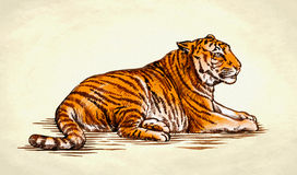 Engrave ink draw tiger illustration Royalty Free Stock Photo