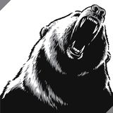 Engrave isolated bear illustration vector sketch linear art royalty free stock photography