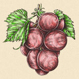 Engrave isolated grape berry hand drawn graphic illustration Royalty Free Stock Photos
