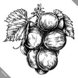 Engrave isolated grape berry hand drawn graphic illustration stock illustration