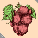Engrave isolated grape berry hand drawn graphic illustration Stock Image