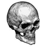 Engrave isolated human skull hand drawn graphic illustration Stock Image