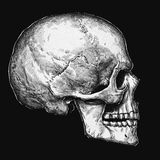 Engrave isolated human skull hand drawn graphic illustration Royalty Free Stock Images