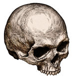 Engrave isolated human skull hand drawn graphic illustration Royalty Free Stock Image