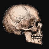 Engrave isolated human skull hand drawn graphic illustration Royalty Free Stock Photo