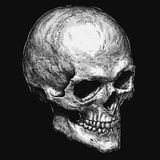 Engrave isolated human skull hand drawn graphic illustration Stock Photo