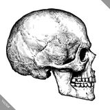 Engrave isolated human skull hand drawn graphic vector illustration Royalty Free Stock Photography