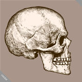 Engrave isolated human skull hand drawn graphic vector illustration Stock Photography