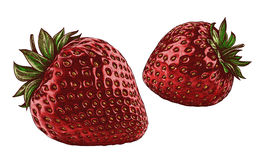 Engrave isolated strawberry hand drawn graphic illustration Royalty Free Stock Image