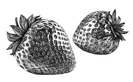Engrave isolated strawberry hand drawn graphic illustration Stock Photos