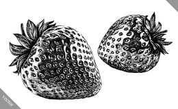 Engrave isolated strawberry hand drawn graphic vector illustration Royalty Free Stock Photos