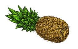 Engrave isolerade drog grafiska illustrationen för ananas handen Royaltyfri Fotografi