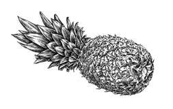 Engrave isolerade drog grafiska illustrationen för ananas handen Fotografering för Bildbyråer