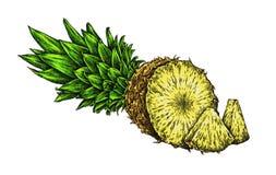 Engrave isolerade drog grafiska illustrationen för ananas handen Royaltyfri Bild