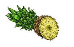 Engrave isolerade drog grafiska illustrationen för ananas handen Royaltyfria Foton