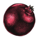 Engrave isolerade drog grafiska illustrationen för granatäpplet handen Arkivfoto