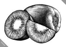 Engrave isolerade drog grafiska vektorillustrationen för kiwin handen Royaltyfri Bild