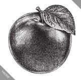 Engrave isolou a ilustração gráfica tirada mão do vetor da maçã ilustração royalty free