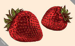 Engrave  strawberry hand drawn graphic vector illustration Royalty Free Stock Photos